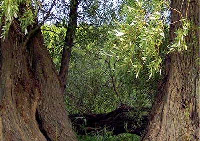 Bäume_